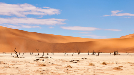 Photo for beautiful landscape in the Namib desert at Deadvlei - Royalty Free Image