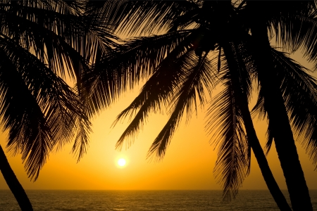 Photo for Image of a Tropical Palm Tree Sunset Background - Royalty Free Image