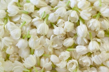 Image of Fresh Jasmine Flower Background