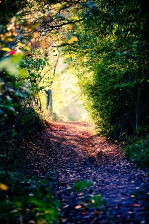 Foto de footpath on fall forest and Light in the end of a tunnel - Imagen libre de derechos