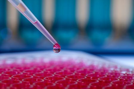 Foto de Pipette with drop of liquid in a chemical laboratory - Imagen libre de derechos