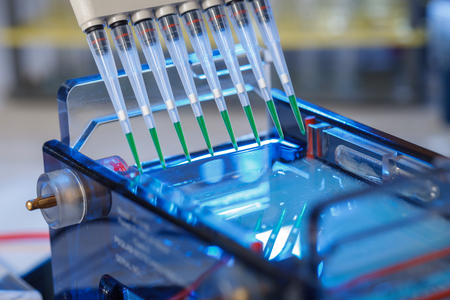 Photo pour loading amplified DNA samples to agarose gel with multichannel pipette - image libre de droit