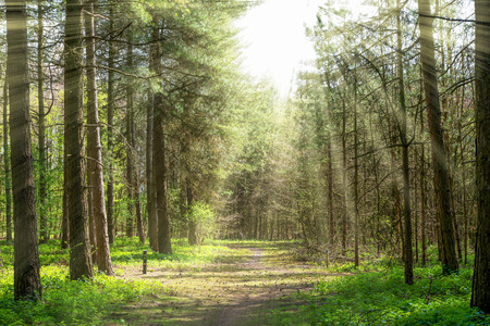 Photo for Forrest path with trees in the middle and sun rays - Royalty Free Image