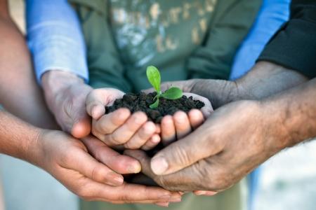 Foto de  Young green plant in hands, environmental conservation - Imagen libre de derechos