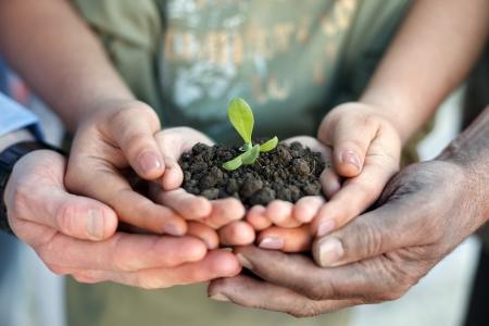 Photo pour  Conceptual closeup environment photo of hands holding a young plant - image libre de droit
