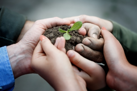 Photo pour  Farmers hands holding a fresh young plant. New life and environmental conservation concept - image libre de droit