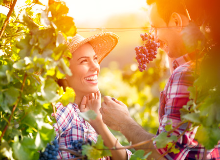 Photo for Smiling love couple in vineyard eating grapes while harvest time - Royalty Free Image