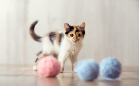 Photo for playing little cat with clews of  wool - Royalty Free Image