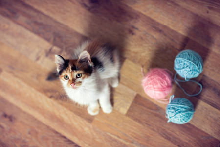 Photo for Cute little kitten, top view - Royalty Free Image