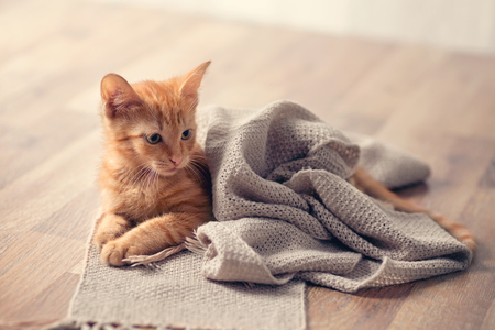 Photo for Young cute kitten on comfort blanket - Royalty Free Image