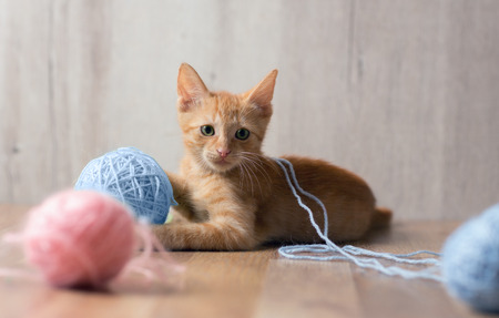 Photo pour Cute red kitten playing with colorful ball of  wool - image libre de droit