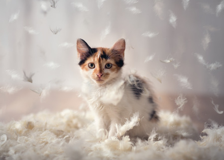 Photo for beautiful kitten plays in a cloud of feathers - Royalty Free Image
