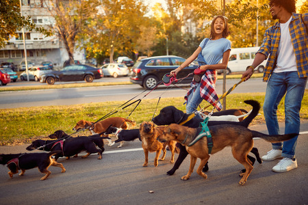Foto per professional couple dog walker with dogs enjoying in walk outdoors. - Immagine Royalty Free
