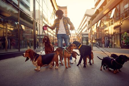 Photo for Happy man playing with their dog while out on a walk - Royalty Free Image