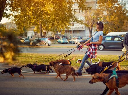 Photo for Smiling girl dog walker with dogs enjoying in walk city. - Royalty Free Image