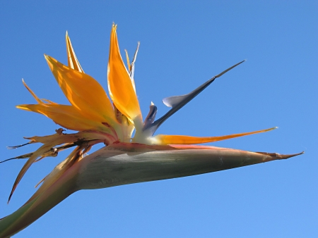 Bird of Paraside with blue sky