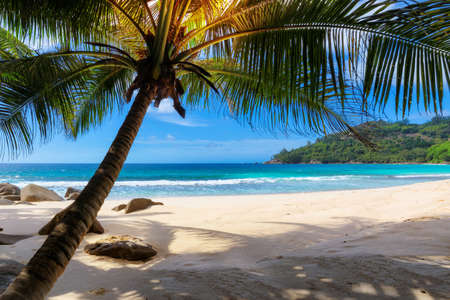 Photo for Tropical sunny beach with palm and turquoise sea. Summer vacation and tropical beach concept. - Royalty Free Image