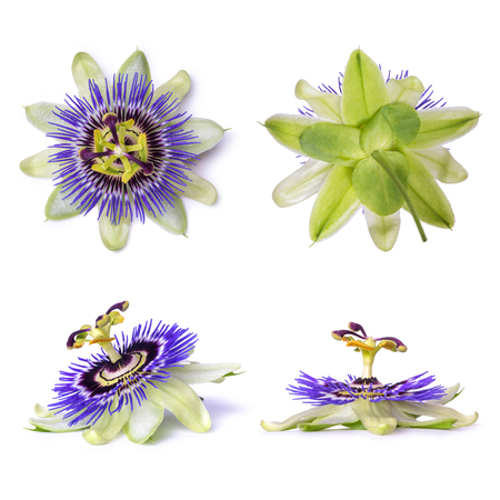Photo for Passiflora passionflower isolated on white background. Big beautiful flower - Royalty Free Image