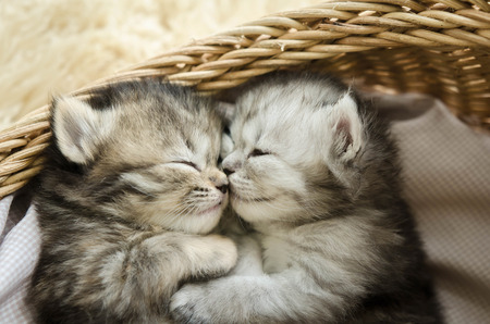 Foto de Cute tabby kittens sleeping and hugging in a basket - Imagen libre de derechos