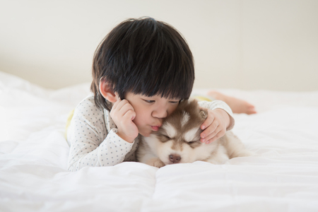 Photo for Little asian child kissing a siberian husky puppy on bed - Royalty Free Image