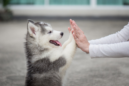 Photo for Give me five -Puppy pressing his paw against a Girl hand - Royalty Free Image