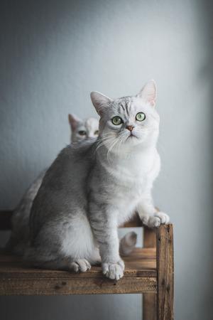Foto de Cute short hair cat sitting and looking on old wood shelf - Imagen libre de derechos