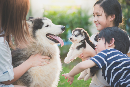 Foto de Asian family playing with siberian husky dog together - Imagen libre de derechos