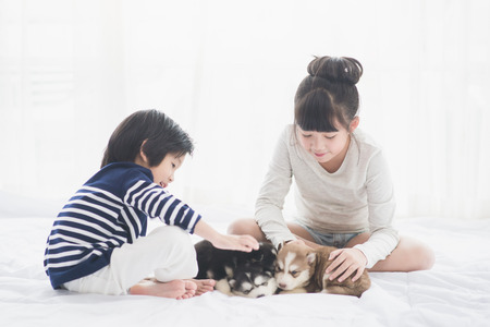 Photo for Asian children playing with puppies on white bed - Royalty Free Image
