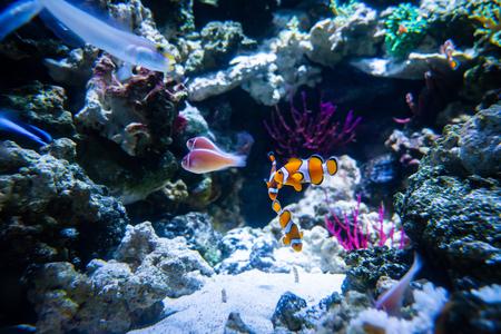 Photo pour Close up of Aquarium fish in aquarium - image libre de droit