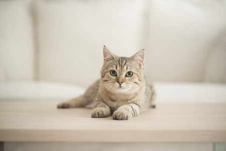 Foto de Cute cat lying on wooden table in living room - Imagen libre de derechos