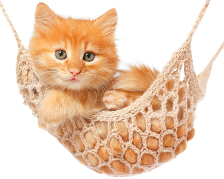 Photo pour Cute red haired kitten lay in hammock on a white background. - image libre de droit
