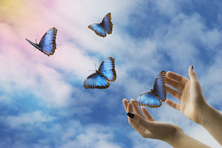 Photo pour open hands let go of beautiful blue butterflies in the mystical sky - image libre de droit