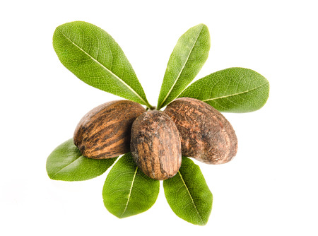 Photo for group of shea nuts with leaves on white  - Royalty Free Image