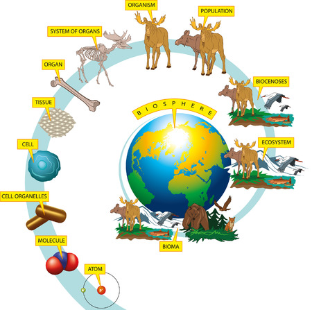 Illustration pour Organization levels of wildlife on Earth. - image libre de droit