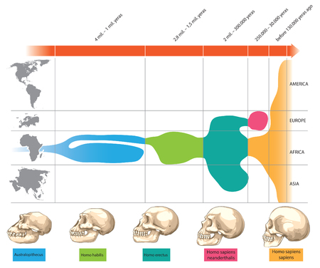 Illustration pour Timeline of human skull evolution - image libre de droit