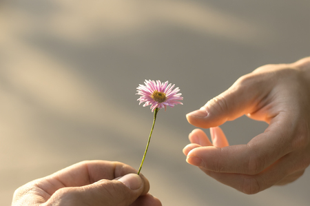 Photo pour Hand gives a wild flower with love. romance, feelings - image libre de droit
