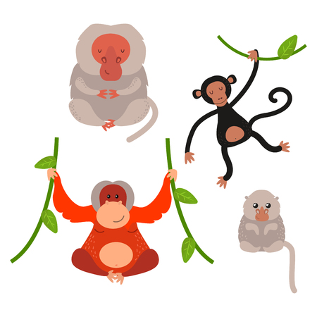 Illustration for Different types of monkeys rare animal vector set. - Royalty Free Image