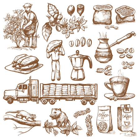 Ilustración de Coffee production plantation - farmer picking beans on tree and vintage drawing drink retro cafe collection sketch dessert illustration. - Imagen libre de derechos