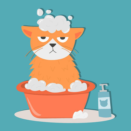 Ilustración de Portrait cat animal bathe pet cute kitten purebred feline kitty domestic fur adorable mammal character vector illustration. - Imagen libre de derechos