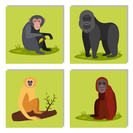 Illustration for Monkey character animal different breads wild zoo ape chimpanzee vector illustration. - Royalty Free Image