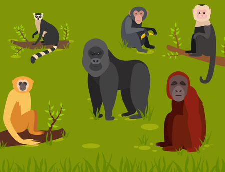 Illustration for Monkey character animal different breads wild zoo ape chimpanzee illustration. - Royalty Free Image