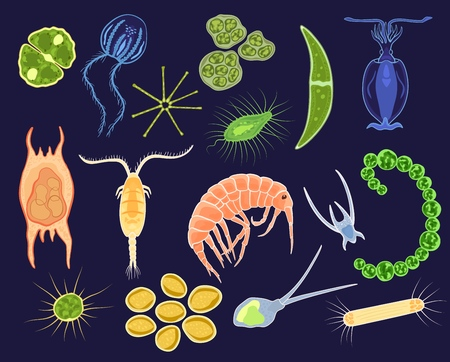 Ilustración de Plankton vector aquatic phytoplankton and planktonic microorganism under microscope in ocean illustration set of micro cell organism in microbiology underwater sea isolated on background. - Imagen libre de derechos