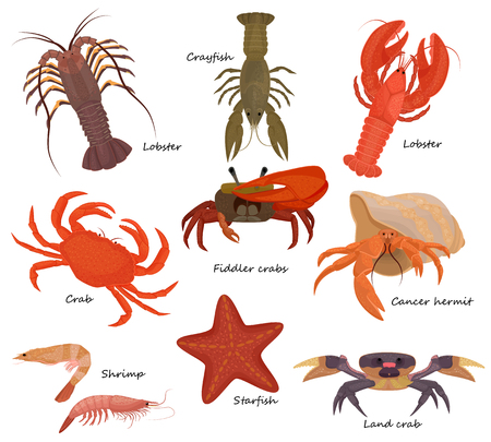 Illustration pour Crustacean vector crab prawns ocean lobster and crawfish or crayfish seafood illustration crustaceans set of sea animals shrimp isolated on white background - image libre de droit