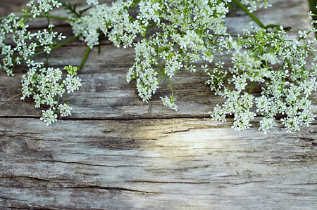 Photo for Summer white flowers on vintage wooden background - Royalty Free Image