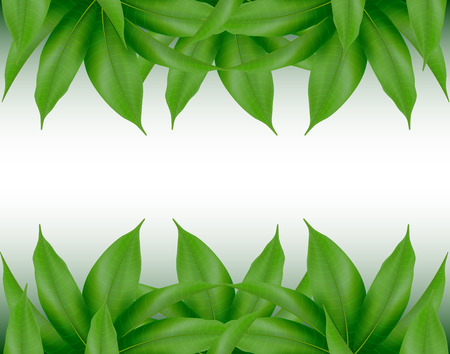 Illustration pour Mango leaves background for banner, celebration, holiday, packaging, poster. Realistic 3d leaf vector. - image libre de droit