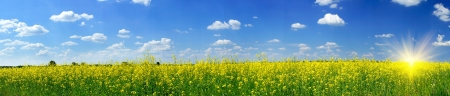 Photo pour Wonderful panorama of rapefield and cloudscape - image libre de droit
