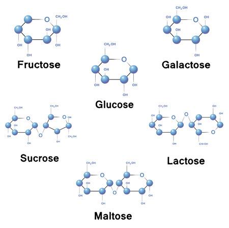 Illustration pour Sugar molecule strucure, biochemistry, chemistry, vector illustration. - image libre de droit