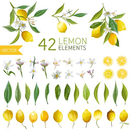 Ilustración de Vintage Lemons, Flowers and Leaves. Lemon Bouquetes. Watercolor Style Lemons. Vector Fruit Background. - Imagen libre de derechos