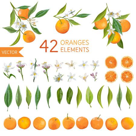 Illustration pour Vintage Oranges, Flowers and Leaves. Lemon Bouquetes. Watercolor Style Oranges. Vector Fruit Background. - image libre de droit