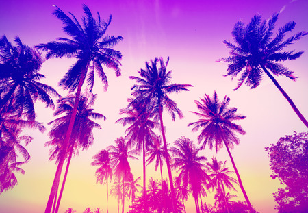 Photo for Vintage toned palm trees silhouettes at sunset. - Royalty Free Image